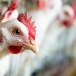 The Chicken Tax