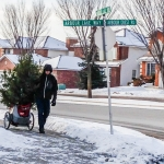 Car Less in Calgary: Day 6, Christmas Tree Shopping